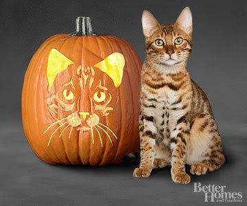 Bengals Pumpkin Carving Stencils Pug Pumpkin Pattern