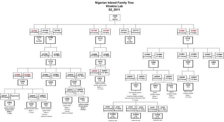 Family Tree Template Google Docs Genetic Family Tree Template Google Search