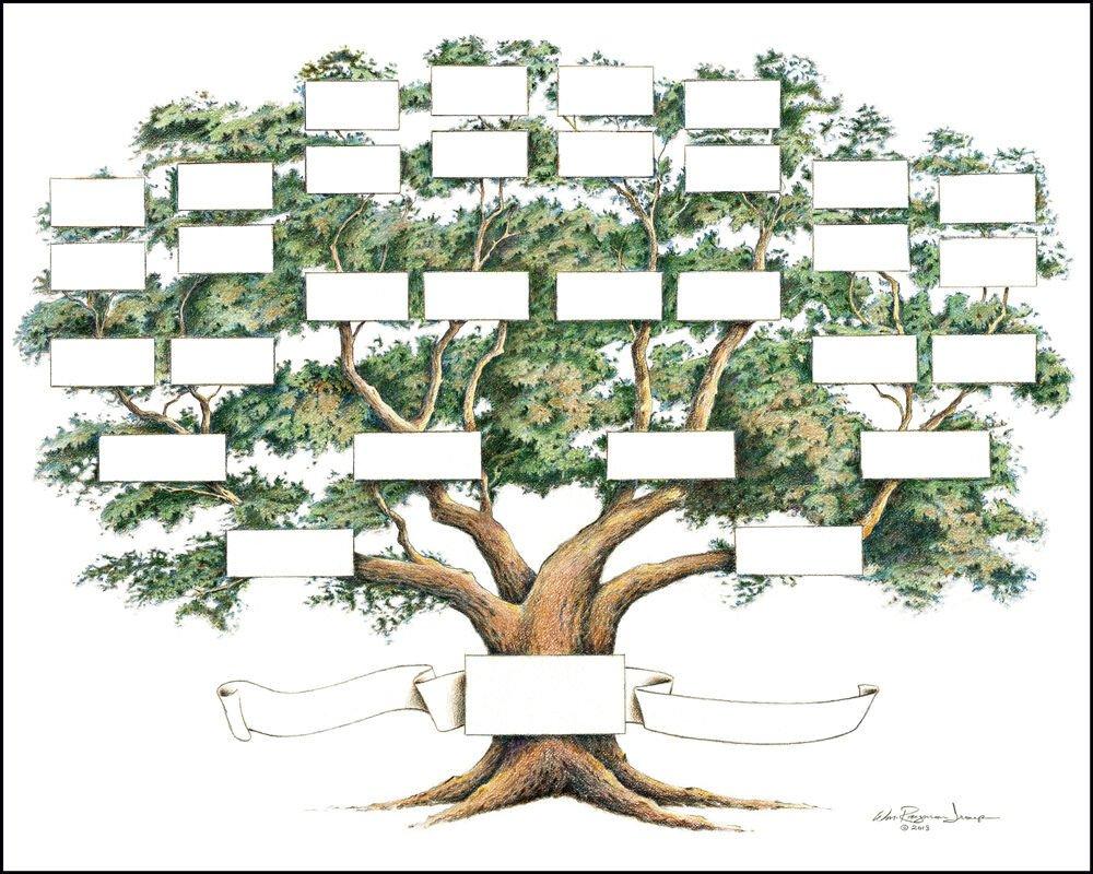 Family Tree Chart 5 to 6 Generations Genealogy 14x18