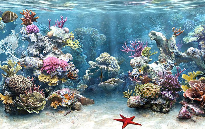 Fish Tank Background Printable 50 Best Aquarium Backgrounds
