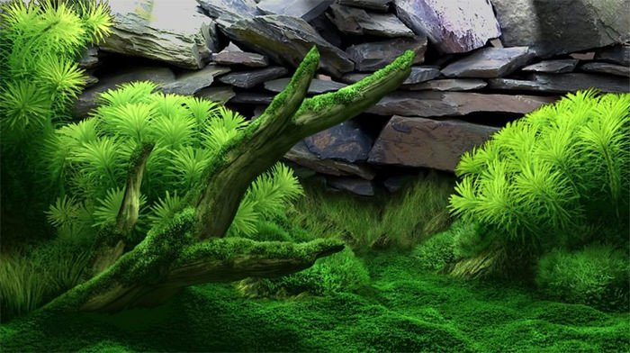 50 Best Aquarium Backgrounds
