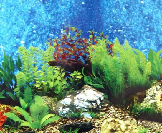 Fish Tank Background Printable Aquarium Backgrounds to Print Free Printable Background