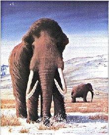 Mammoth P Free Sample 1000 Images About Mammoths On Pinterest