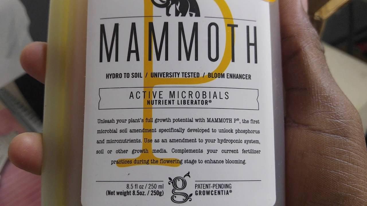 Mammoth P Free Sample Mailcall Mammoth P Samples