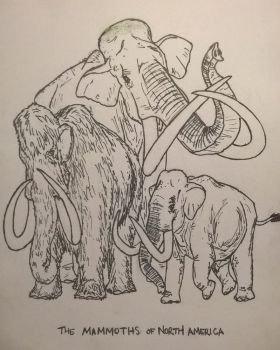 Mammoth P Free Sample Proboscidean