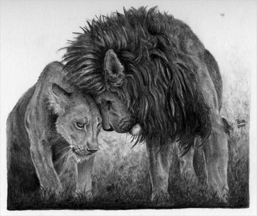 Pencil Drawings Of Love 17 Lion Drawings Pencil Drawings Sketches